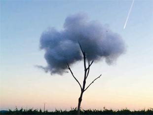 ABachchetta - L'arbre nuage